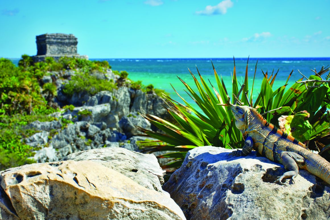 Mayan ruins of Tulum on the tropical coast of Mexico with a beautiful iguana in the foreground.