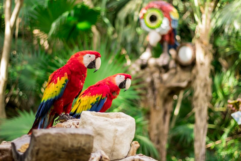 Two parrots perch on a stone column at Xcaret.